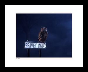 Privet Drive Art Print