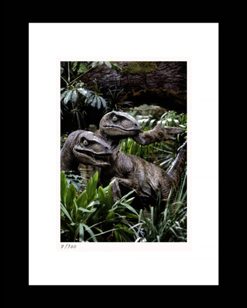 Hunting in Packs Art Print - 16x20 Portrait