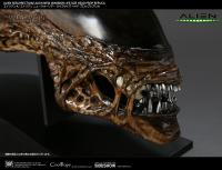 Gallery Image of Alien New Warrior Life-Size Head Prop Replica