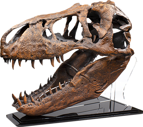 Master Replicas Group T-Rex Skull Replica