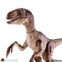 Gallery Image of Velociraptor Sixth Scale Figure