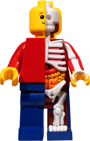 Supersized Micro Anatomic (Junior) Collectible Figure