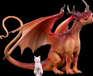 Dragon & Cat Collectible Set