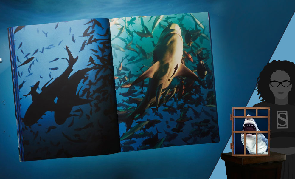 Gallery Feature Image of Michael Muller. Sharks Book - Click to open image gallery