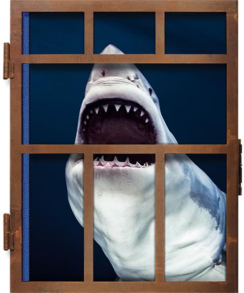 TASCHEN Michael Muller. Sharks Book