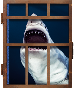 Michael Muller. Sharks Book