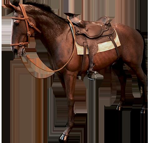 Star Ace Toys Ltd. James Dean Horse Sixth Scale Figure