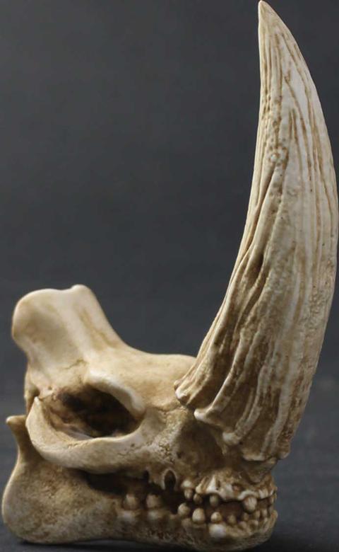 Regal Robot Mudhorn Skull Statue