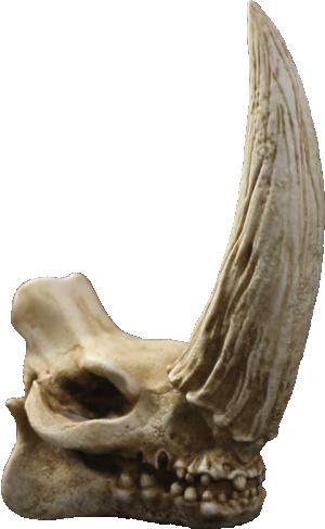 Mudhorn Skull Statue