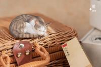 Gallery Image of Sleeping Tabby Cat Statue