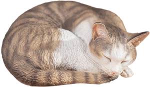 Sleeping Tabby Cat Statue