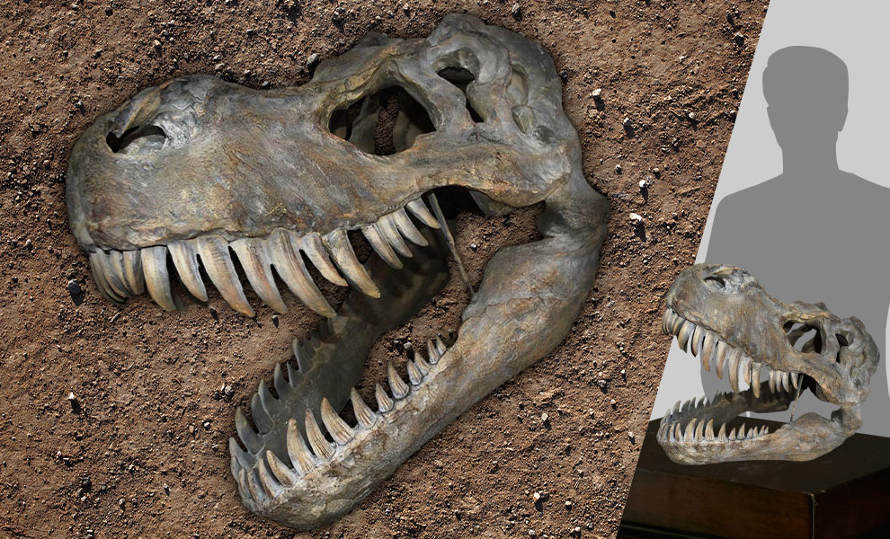Gallery Feature Image of Tyrannosaurus Rex Large Skull Wall Decor Mixed Media Statue - Click to open image gallery