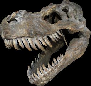 Tyrannosaurus Rex Large Skull Wall Decor Mixed Media Statue