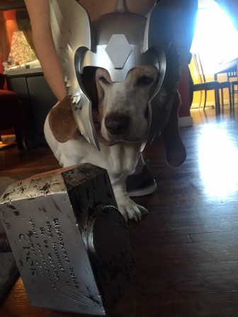 These pets dressed as Thor are our heroes!