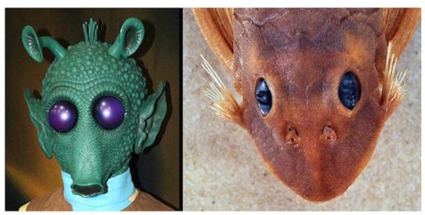 A Fish Called Greedo –Scientists name a new species after the Star Wars Bounty Hunter