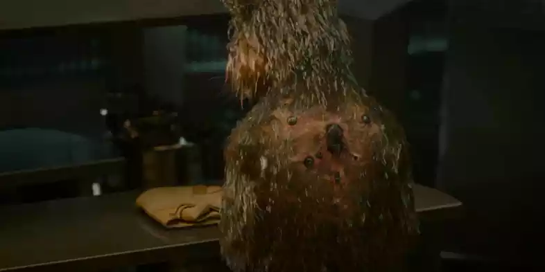 Guardians Of The Galaxy: Things You Didn't Know About Rocket