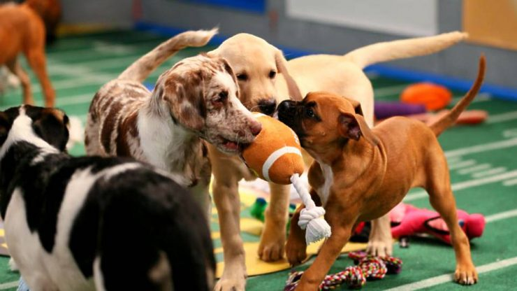 Puppy Bowl Breaks Demo Ratings Record