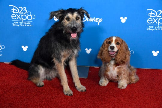 Lady and the Tramp on the red carpet