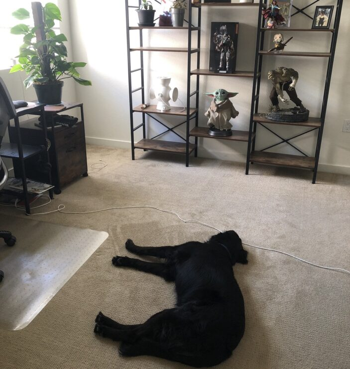 A dog lies in wait for her absent owner Paul, overseen by many collectibles