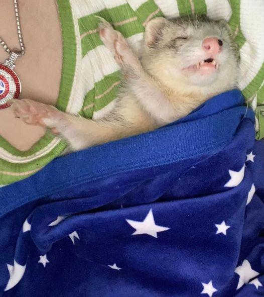 Let Your Geek Sideshow Facebook Group member Shari A.'s sleeping ferret
